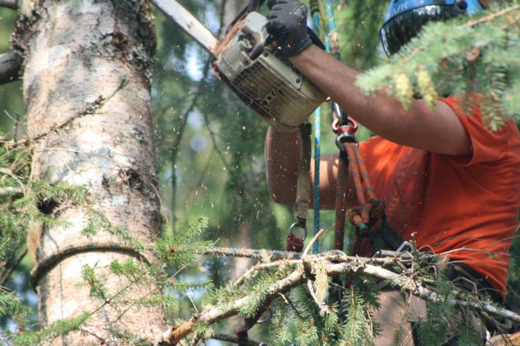 Tree Trimming Delaware