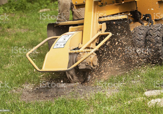 A stump grinding machine is removing the remaining stump of a cut tree in a grass yard. The spinning blade grinds the stump from the ground allowing the area to be filled in with soil and grass.